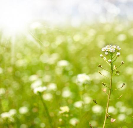 Spring or summer abstract season nature background with grass and bokeh lights. Stock Photo - 21075715