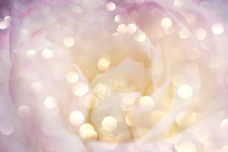 Romantic background with delicate rose close up. Stock Photo - 65879771