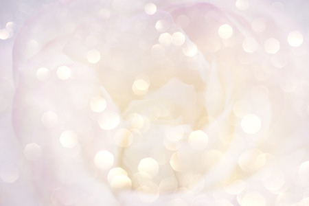 Romantic background with delicate rose close up.