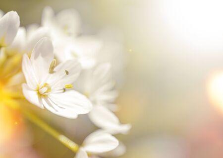 Beau fond de printemps avec bokeh, copiez l'espace pour le texte