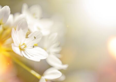 Beautiful spring background with bokeh, copy space for text