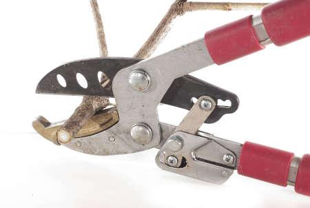 secateurs: The secateurs cut branches