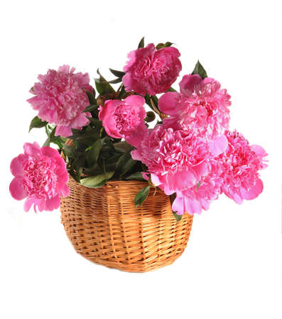 Peonies in a basket stand on a table Stock Photo - 10028687