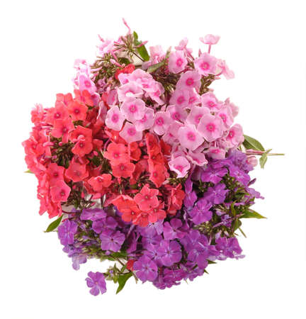 Red, lilac, pink flowers phloxes are collected in a bouquet Stock Photo