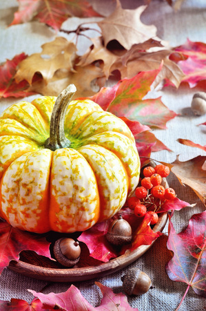 gourds: Pumpkins. Gourds. Autumn decoration. Thanksgiving. Selective focus. Toned image