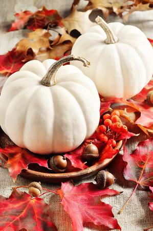 gourds: Pumpkins. Gourds. Autumn decoration. Thanksgiving. Selective focus.