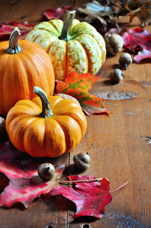 pumpkins gourds: Pumpkins. Gourds. Autumn decoration. Thanksgiving. Selective focus.