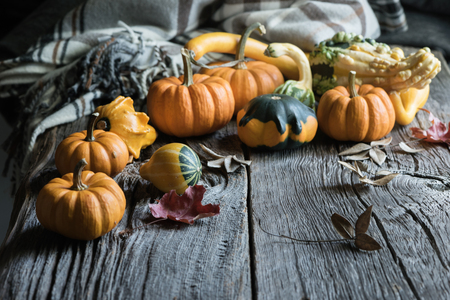 Pumpkins or gourds. Fall or autumn blanket. Selective focus, copy space, toned image