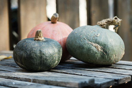 Squashes. Selective focus, copy space, toned image