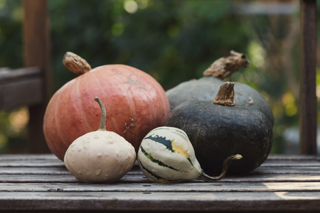 Pumpkins, gourds, squashes. Selective focus, copy space, toned image