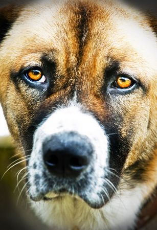 close up of a dogs face Stock Photo - 5076787