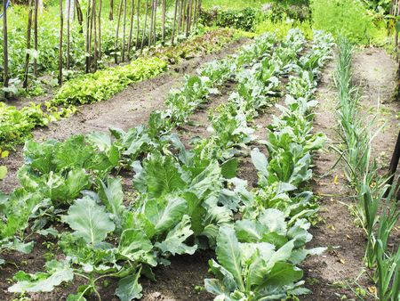 allotment: An organic vegetable garden in a rural setting Stock Photo