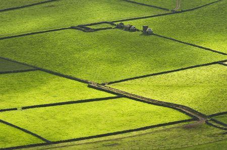 Farm fields in the Terceira island in Azores Stockfoto