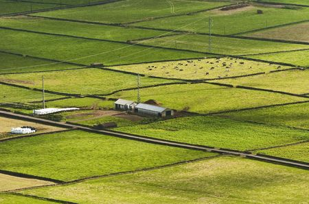 agriculture azores: Farm fields in the Terceira island in Azores Stock Photo