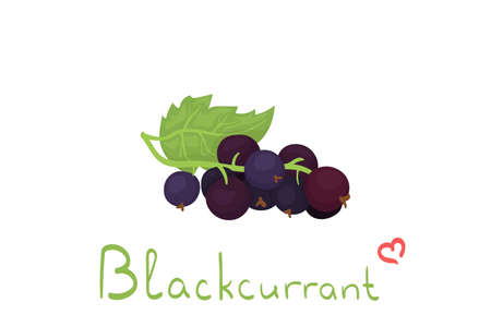 Cartoon vector illustration with blackcurrant isolated on white background. Cute summer berries with lettering. Use for fabric print, food package, wrapping paper. Juice/smoothie decoration.