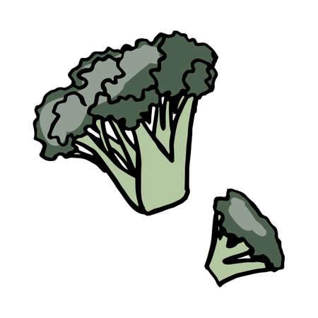 Fresh vegetable broccoli. Healthy food. Growing vegetables. Live vitamins. Summer vegetables. Vector illustration.