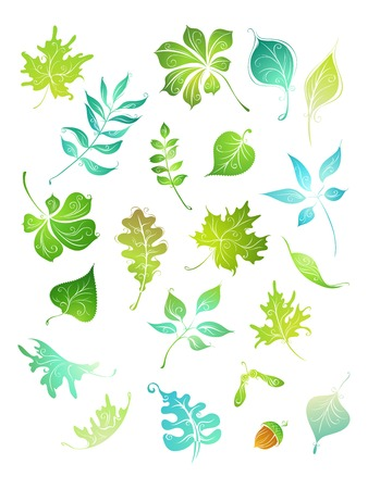 elements of nature: Vector green leaves. Hand-drawn nature elements for your design isolated on white background. Illustration