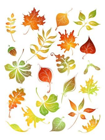 Vector set of autumn leaves. Birch, elm, oak, rowan, maple, chestnut, acorn, aspen isolated on white background. Иллюстрация