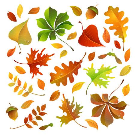 Vector set van kleurrijke herfst bladeren. Eik, esdoorn, berk, lijsterbes, kastanje bladeren en eikels voor uw ontwerp op een witte achtergrond.
