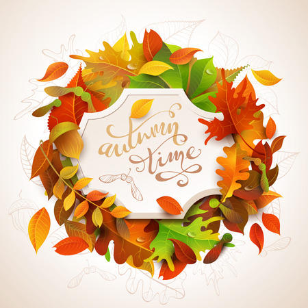 Autumn time background. Birch, elm, oak, rowan, maple, chestnut, aspen leaves and acorns. Bright colourful autumn leaves and white paper badge on them. You can place your text in the center. Illustration