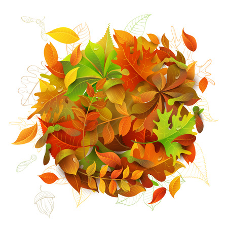 acorn: Bright Autumn Background. Colourful autumn maple, oak, birch, elm, rowan, chestnut, aspen leaves and acorns on white background.