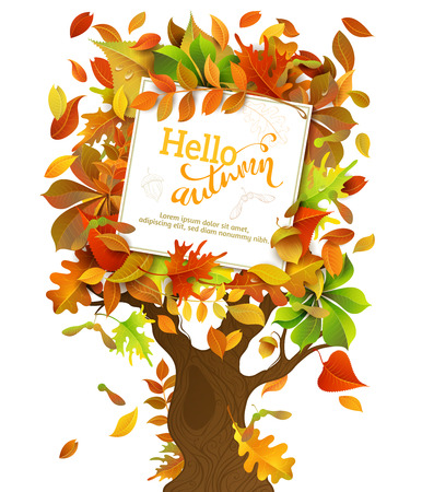 acorn: Hello Autumn Background. Bright colourful birch, elm, oak, rowan, maple, chestnut, aspen leaves and acorns on autumn tree. White square sheet of paper on it. You can place your text in the center.