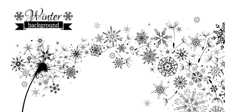 scene: Winter and Summer. Winter Dandelion Background. Black flying dandelion fluffs and snowflakes on white background. There is place for your text.