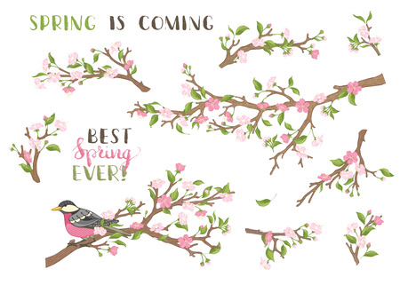 in bloom: Blossoms, leaves and bird on tree branches. Hand-written brush lettering. Best spring ever! Spring is coming.