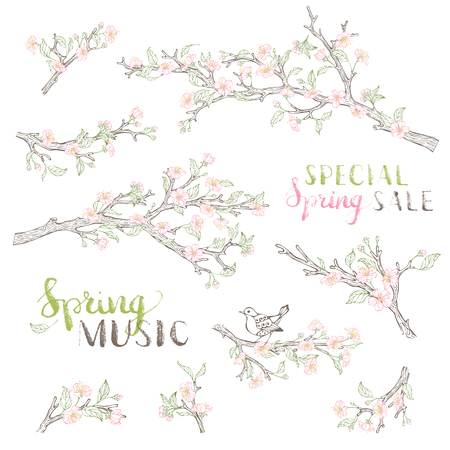 cherry blossom: Blossoms, leaves and bird contours on tree branches. Isolated on white background. Hand-written brush lettering. Spring music. Special spring sale.