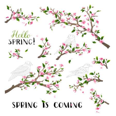 Blossoms and leaves on tree branches. Hand-written brush lettering. Bird contours. Hello spring! Spring is coming.