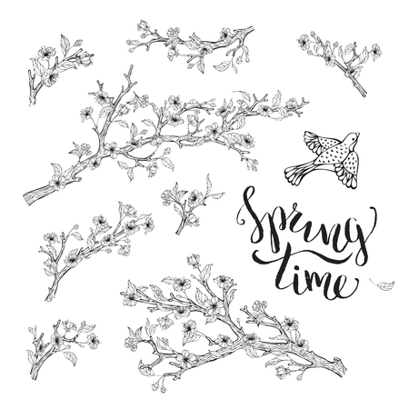 cherry blossoms: Blossoms, leaves, branches and bird contours. Hand-written brush lettering. Spring time. Coloring book elements template.