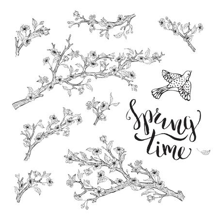 cerezos en flor: Flores, hojas, ramas y los contornos de las aves. letras cepillo escrito a mano. El tiempo de primavera. Colorear plantilla de elementos de libros.