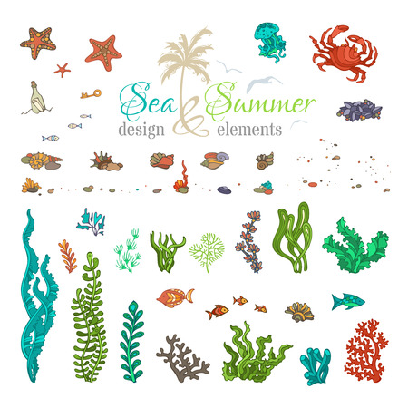algae: Vector set of underwater sea life design elements. Cartoon illustration. Various shells, algae, fish, jellyfish, starfish, bottle with a letter, key, stones and bubbles isolated on white background.