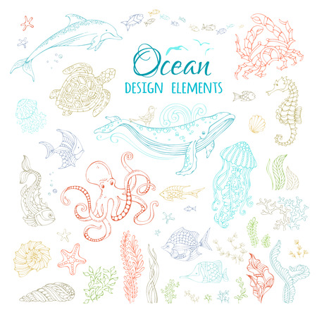ocean plants: Vector set of ocean animals and plants. Colourful contours isolated on white. Whale, octopus, dolphin, turtle, fish, starfish, crab, shell, jellyfish, seahorse, seaweed. Underwater sea life. Illustration