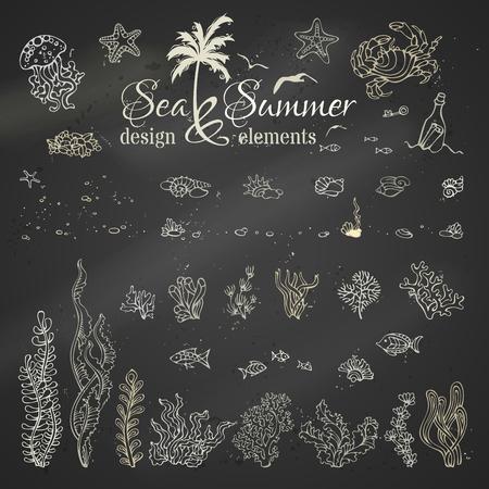 algas marinas: Vector conjunto de elementos de diseño de la tiza marinos. Vaus conchas de tiza, algas, peces, medusas, estrellas de mar, botella con una carta, llave, piedras y burbujas en el fondo de la pizarra.