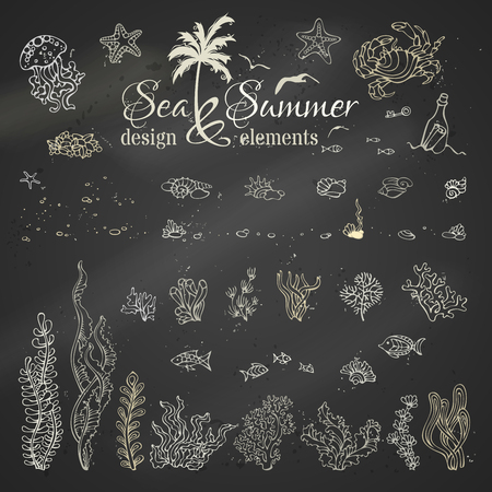 black board: Vector set of chalk marine design elements. Various chalk shells, algae, fish, jellyfish, starfish, bottle with a letter, key, stones and bubbles on blackboard background.