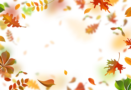fall leaves on white: Vector bright autumn leaves fall down. A lot of colourful leaves on white background. Nature horizontal backdrop. Blurred background. Oak, rowan, maple and chestnut leaves.