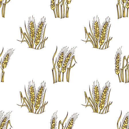 wheat harvest: Vector seamless wheat pattern. Thanksgiving day. Harvest time. Boundless background for your design.