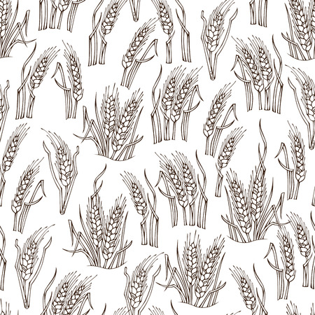 wheat harvest: Vector seamless sketch wheat pattern. Hand-drawn wheat on white background. Thanksgiving day. Harvest time. Boundless outlined background for your design.