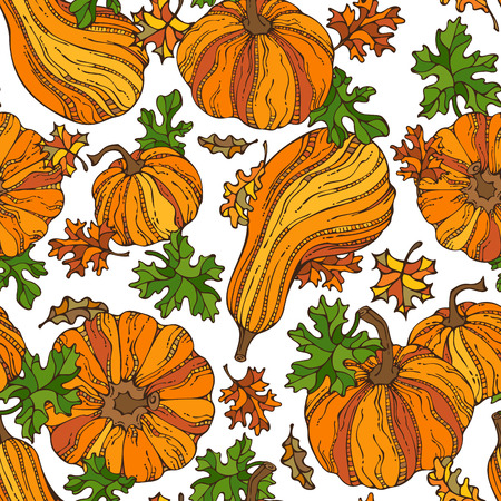 Vector seamless pumpkin pattern. Set of various pumpkins and leaves on white background. Thanksgiving day. Harvest time. Bright boundless background for your design. Vector Illustration