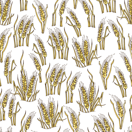 harvest time: Vector seamless wheat pattern. Hand-drawn wheat on white background. Thanksgiving day. Harvest time. Boundless background for your design. Illustration