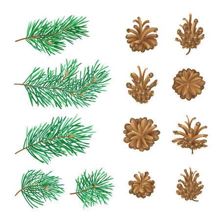 High detailed pine cones and branches with needles. Vector forest collection isolated on white background. Christmas design elements. Illustration
