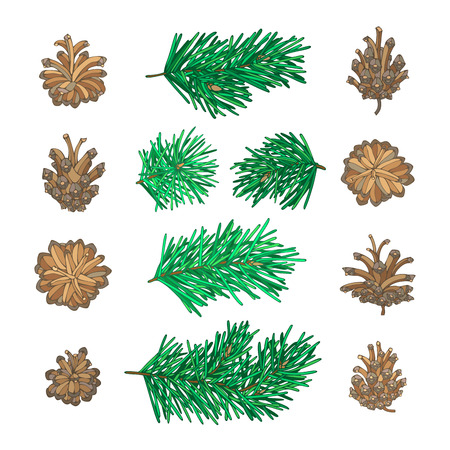 Pine tree branches and cones for Christmas decorations. Vector nature set. Hand-drawn design elements isolated on white background. Illustration