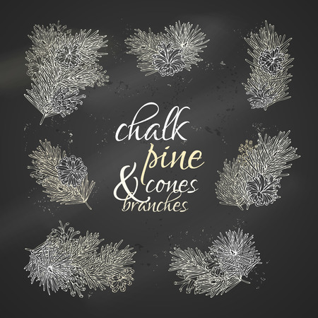 conifer: Vector set of chalk conifer tree branches. Pine branches with needles and cones on blackboard background. Vector nature illustration. Christmas design elements.