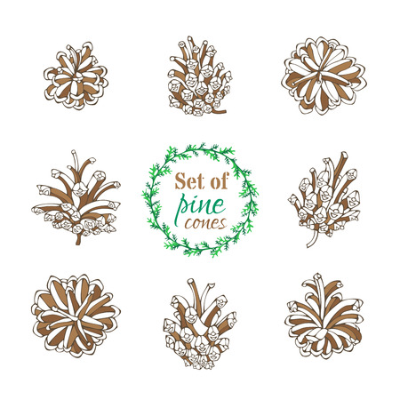 prickle: Vector set of pine cones isolated on white background. Hand-drawn nature illustration. Christmas decorations set.
