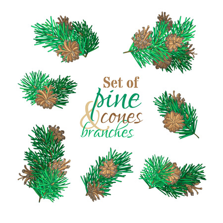 Set of pine branches with needles and cones. Vector forest set. Christmas design elements isolated on white background.