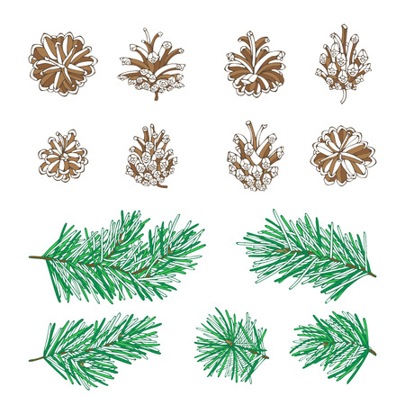Vector pine tree branches and cones set. Pine needles and cones. Vector nature illustration. Christmas design elements. Illustration