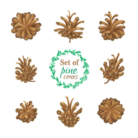 pine decoration: Vector set of pine cones isolated on white background. High detailed nature illustration. Festive decoration. Illustration