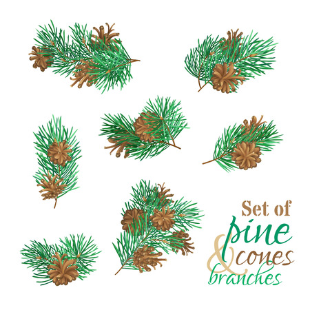 adorn: Branches of conifers with needles and cones. High detailed pine tree branches isolated on white background. Vector plants set. Christmas design elements.