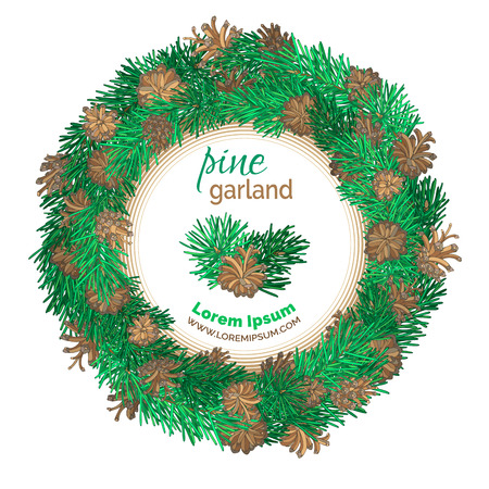 cedar: Christmas pine wreath isolated on white background. Vector festive garland decoration. Pine branches and cones. There is place for your text in the center.